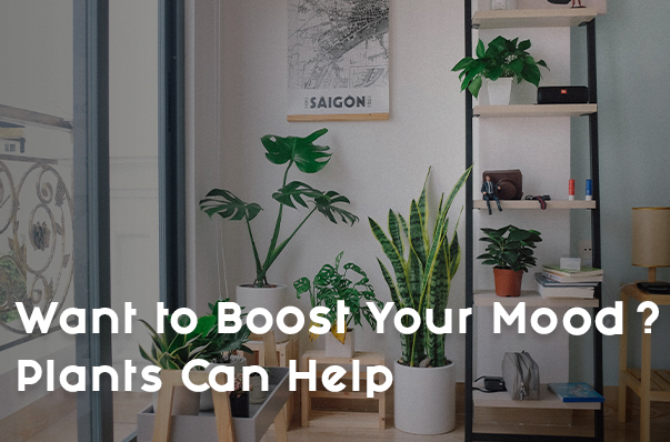 Want to Boost Your Mood? Plants Can Help
